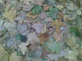 Autumn Leaves by felixplesoianu