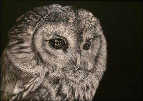 Owl Scratchboard by ninangame