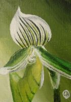 365DCCDay1 Little Green Orchid by soarts