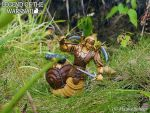 Warsnail 3D printed action figure  C by hauke3000