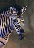 Common Zebra by WillemSvdMerwe