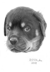 Rottweiler Puppy 4 by Torsk1