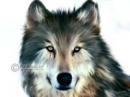 wolf painting by perlaque