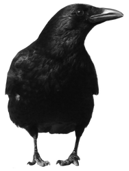 crow 4 by peroni68