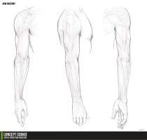 Anatomy Resource: The Arms by CGCookie