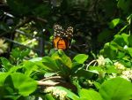 Butterfly by SMMB25