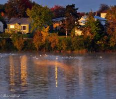 A Fall Morning by Brian-B-Photography