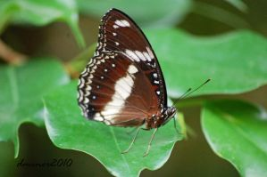 Butterfly 03 by daniellepowell82