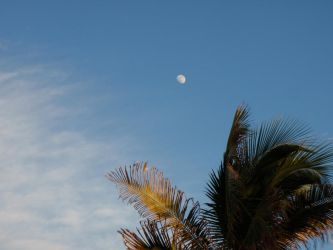 Florida Evening by EarthElement12