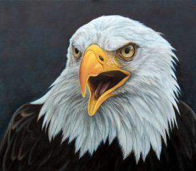 Bald Eagle. Oil on Panel. by painterman33