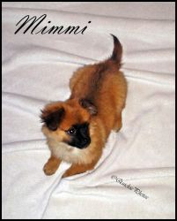 Mimmi - the cuttest dog on the World by QuickiePhotos