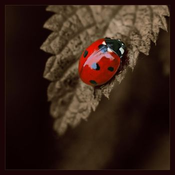 luck by vw1956