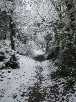 snowy path by redpill1984