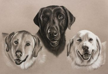 3 Labs  - charcoal by AllieRaines