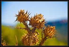 Thistles by LyrixDeRaven
