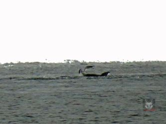 Seagull Landing On Dolphin by wolfwings1