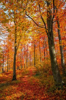 Autumn colorful trees by valiunic