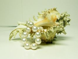 Conch Shell with Pearls Stock3 by NoxieStock