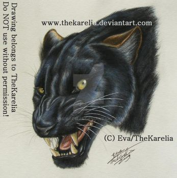 Panther by TheKarelia