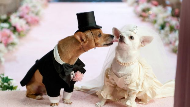 Dog Couple Wedding Dress - Paul Hayward Bangkok by paulhaywardbangkok