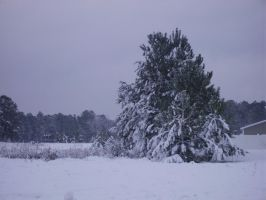 snow in MB SC 2-13-2010 10 by unickme