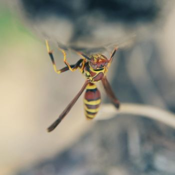wasp by aniamm