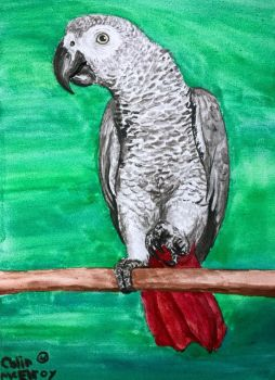 African Grey by MickeyRayRex