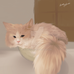 CreamHeroes' Cat by Nymnxcat