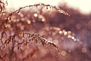 Ice bokeh by fotografka