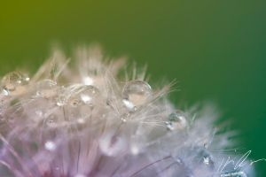 Cool morning drops by Mioko001