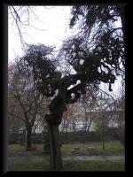 tree by MidoriAnca by Ro-nature
