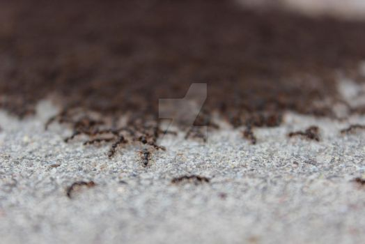 Epic Ant War 2015 by HalfTalent082690