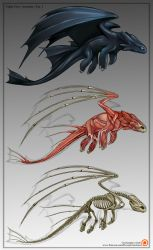 Toothless Deconstruction (Night Fury Anatomy) by Christopher-Stoll