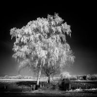Winter Tree Infrared... by MichiLauke