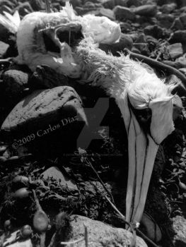Mortal Coil by catinthebobblehat