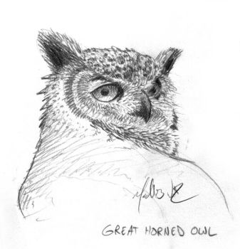 Great Horned Owl by actionBob