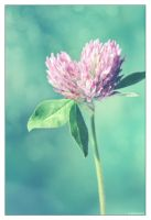 Clover Love by Limaria