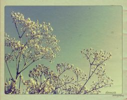 forget me not.. by nono-sukar