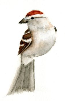 Chipping Sparrow by worldwise001