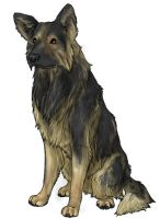 German Shepherd Dog by mx-mouse