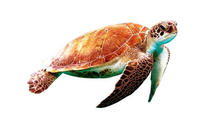 Tortuga Render by M0d3xX
