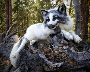 Marble Fox Quil by AdarkerNEMISIS