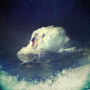 The swan... by ChristineAmat