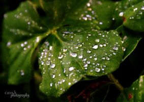 After the Rain I by cassarcasm