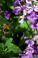 It bee a lovely contrast by karliosi