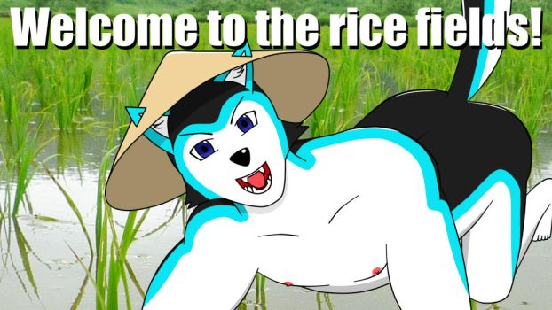 Welcome to the Rice Fields! by DrReverb