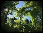 Blue sky and tree. by Bellelina-64