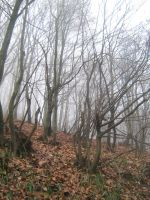 UNRESTRICTED - November '09 - Foggy Forest 3 by frozenstocks