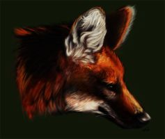 Maned Wolf Portrait by vivadawolf