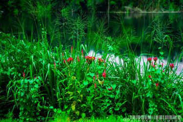 Plants along the Quarry by ahpoke